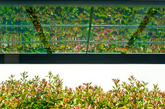 Glass Roof Bustop Bushes Reflections (Orbmiser) Tags: roof glass oregon reflections portland spring nikon busstop bushes d90 55200vr