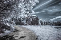 Local park. (blackwoodse6) Tags: park uk blue trees england white london clouds ir fuji lewisham bluesky filter infrared foilage southlondon ladywell catford southeastlondon hoyar72 londonparks infraredphotography se13 720nm se6 ladywellfields fujixt1