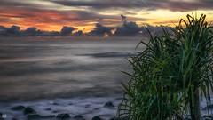 A hint of red (BAN - photography) Tags: ocean longexposure sea cloud grass sunrise dawn rocks surf daybreak pandanus d810