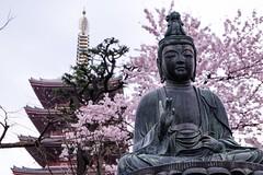 Sensoji II (Douguerreotype) Tags: pink statue japan cherry temple tokyo pagoda shrine blossom buddhist cherryblossom sakura