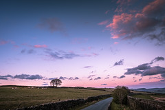 Big Pink Sunset (Andy T Whittaker) Tags: sunset tree clouds landscape skies sheep yorkshire westyorkshire holmfirth