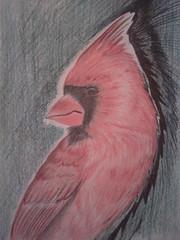 Cardinal (trinacolada world) Tags: color bird sketch cardinal artistic drawing wildlife