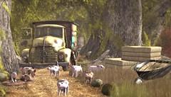 Piglets on the loose (Alexa M.) Tags: animals outdoors secondlife pigs jian happymood alirium 8f8