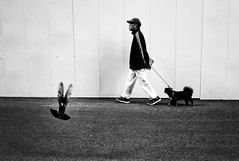 3 (Jiajun Yang) Tags: life street city people bird walk streetphotography