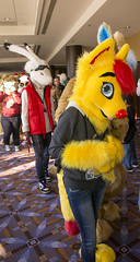 _DSC0519 (Acrufox) Tags: midwest furfest 2015 furry convention december hyatt regency ohare rosemont chicago illinois acrufox fursuit fursuiting mff2015