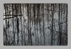 April (Sergei P. Zubkov) Tags: water april 2014