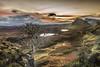 That Tree (bradders29) Tags: tree skye clouds sunrise scotland december highland d750 trotternish quiraing biodabuidhe