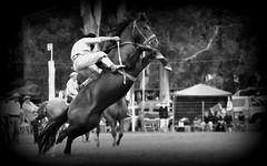 El zaino estrello (Eduardo Amorim) Tags: horses horse southamerica argentina criollo caballo cheval caballos cavalos pferde herd cavalli cavallo cavalo gauchos pferd ayacucho chevaux gaucho cavall  amricadosul gacho amriquedusud provinciadebuenosaires  gachos  sudamrica suramrica amricadelsur sdamerika crioulo caballoscriollos criollos jineteada  tropillas buenosairesprovince americadelsud gineteada tropilhas tropilla crioulos cavalocrioulo americameridionale tropilha caballocriollo eduardoamorim cavaloscrioulos