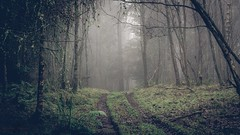 Cabin Fever (Augmented Reality Images (Getty Contributor)) Tags: trees winter mist cold forest canon woodland landscape scotland moss scary stitch perthshire creepy hdr