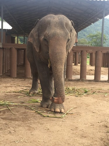 dulguun elephant