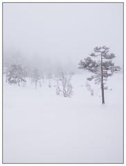 Winter trees (Georg Engh) Tags: trees winter white fog vinter minimal austagder ynaheia herefoss landscapesshotinportraitformat toplandsheia