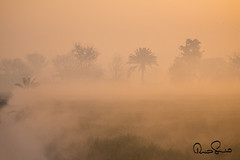 misty morning (TARIQ HAMEED SULEMANI) Tags: morning mist colors canon culture sensational tariq supershot concordians sulemani