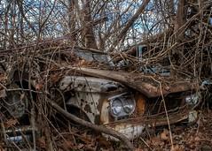 DSC08547.ARW-01 (juice95m3) Tags: abandoned rust vintagecar automobile junkyard oldcars classiccars