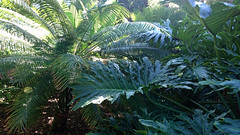 Jungle garden (annamaart) Tags: jungle tenerife teneriffa canaryislands puertodelacruz kanariearna djungel