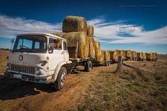 Paddock train (Rob Reaburn Photography) Tags: train truck bedford farm farming transport australia victoria trailer hay bales towing paddock carting roundbales ontheland wimmera karabeal