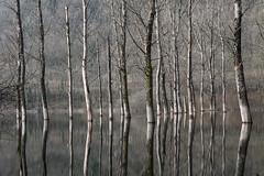 Les pieds dans l'eau (callifra7) Tags: lac poselongue canoneos70d arbre tree lake winter hiver innondation leshôpitaux ain flood filtrend400 efs18135mmf3556isstm diamondclassphotographer flickrdiamond