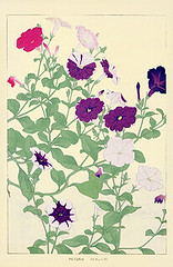 Petunia (Japanese Flower and Bird Art) Tags: flower art japan print japanese soun petunia woodblock nihonga solanaceae chigusa readercollection