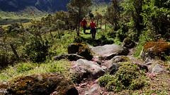 El Bosque village