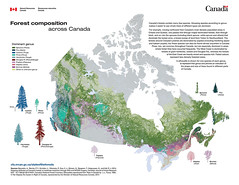 Forest composition across Canada (Vivid maps) Tags: forest forestry pins science research pines acer maples fort birches cedars firs spruces betula poplars douglasfir picea pinus hemlocks recherche populus abies sapins bouleaux cdres peupliers tsuga pseudotsuga rables doublas thuha foresterie pinette pruches forestcomposition compositiondesforts