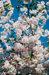 Spring (irinachobotova) Tags: world life new trip travel pink flowers blue trees light summer sky people sun house holiday flower tree cute love home nature beautiful landscape happy photography evening town photo spring nice nikon europe view russia top live happiness petersburg adventure explore romantic flowering 2015 beautyshoots nikond5100