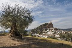 Olivo (manolovega) Tags: canon iglesia granada castillo olivo panormica montefro canon40d manolovega