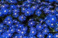 (slimjim340) Tags: flower longwood