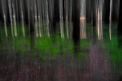 Green fog beyond red ground (ICM-Photography) (matthiasstiefel) Tags: trees light abstract forest painting spring wald bume icm abstrakt frhling gemlde internationalcameramovement lumix20mmf1