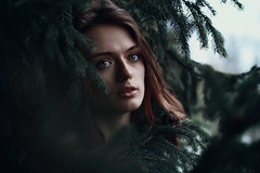 Among the Branches. 249/365 (aleah michele) Tags: blue cold color tree eye beautiful pinetree pine dark evening eyes dof emotion branches roots calm depthoffield adventure evergreen pineneedles pines 365 concept lovely emotional conceptual chill beautifuleyes emotive bluegreen emerge searching vulnerable pleading appears pinebough glassyeyes 365project conceptualportrait aleahmichele aleahmichelephotography