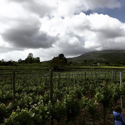 #vino #vesuvio
