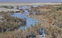 Spring Near Mormon Point / Death Valley (Ron Wolf) Tags: california nature landscape nationalpark spring fault geology geomorphology earthscience saltpan deathvalleynationalpark hydrology