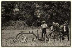 Working in the field. (Joe Schneid) Tags: ohio nikon d2x amish horsedrawn ll hayrake nikon70200f28vr southeastohio nikcollectionplugins