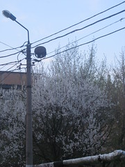 IMG_4068 (Souls_Eater) Tags: trees windows sky building speed cherry evening spring walk ukraine wires apricot everydaylife donetsk