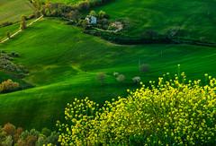 _DSC5106 (Giuseppe Cocchieri) Tags: light color verde green primavera colors yellow landscape countryside spring nikon colore earth hill hills campagna giallo nikkor terra colori luce paesaggio colline collina