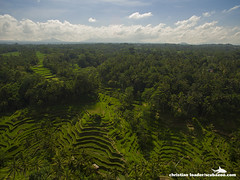 Tegalalang rice terraces - Bali-2016-7 (Christian Loader) Tags: bali field indonesia rice terrace aerial system unesco worldheritagesite agriculture irrigation ubud paddyfield riceterrace drone phantom3 tegalalang aerialimage subak tegallalang scubazoo christianloader tegalalangriceterrace scubazooimages djiphantom3professional