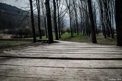 Pontile 02 (Luca Frigo) Tags: lago natura lamar pontile terlago