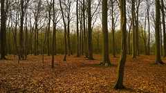 WP_20160402_14_17_56_Pro (Mado AwaD) Tags: park camera wood sky plant tree nature skyline forest lens landscape spring colorful niceshot peace belgium belgie outdoor air scene calm sharp jungle april serene capture bushypark mado greem 2016 wonderfulshot