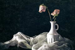 Roses Die Slowly but Gracefully (Sierra Springs Photography) Tags: flowers stilllife rose blackbackground studio spring naturallight vase gauze windowlight driedflowers sidelight sierraspringsphotography karenschmautz