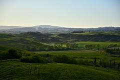Looking for Siena (Antonio Cinotti ) Tags: italy landscape nikon italia hills tuscany siena toscana rollinghills paesaggio colline cretesenesi asciano campagnatoscana d7100 nikon1685 nikond7100