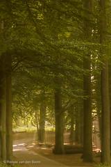 The Sunny Path (Renate van den Boom) Tags: europa nederland natuur boom bos zon veluwezoom landschap jaar weer gelderland 2014 maand 09september