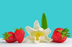 Spring Medley (njk1951) Tags: red stilllife white flower fruit spring strawberry turquoise tulip redstrawberries whitetulip curvytulip