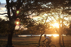 [114/366] Golden hour (Anna Jlia | Photography) Tags: park bike project golden photo day photos year hour 366