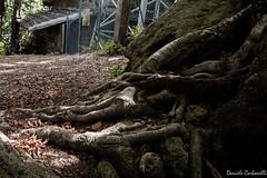 Monte Amiata (carbonelli93) Tags: alberi monte toscana rosso radici cima foresta amiata