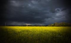 (IMAphotoArt) Tags: landscape nuvole blu giallo cielo campo fiori colori paesaggio
