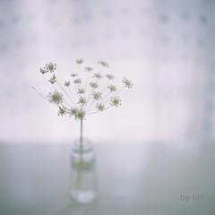 . (k) Tags: flowers hasselblad500cm filmkodakportra160