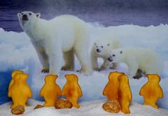Penguins & Polar Bears -  -  Macro Monday - May 2, 2016 (DarkOnus) Tags: macro closeup lumix with pennsylvania panasonic letter p monday 2d buckscounty begins mondays the macromondays dmcfz35 darkonus beginswiththeletterp