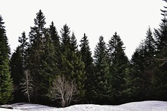 Charmant Som (Ikram K.) Tags: trees mountain snow mountains green nature beauty landscape spring hiking horizon hill chartreuse hills creation