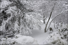 LAWN WHITEOUT, NO MOWING REQUIRED (susies.genii) Tags: trees snow scenery outdoor frontlawn ourgarden whiteout snowcovered adirondackchair winterscene february52016