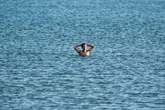1 in the sea (Flimin) Tags: blue sea swimmer minimalism petone 70d petonebeach canon70d canon100400mmii