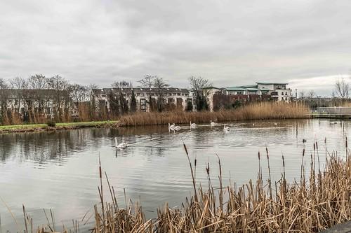Wind Powered Public Park In Clongriffin Dublin [Father Collins Park]-110941