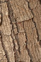 Wrinkles of time (kaushal373) Tags: wood brown tree nature pattern trunk cracks wrinkles